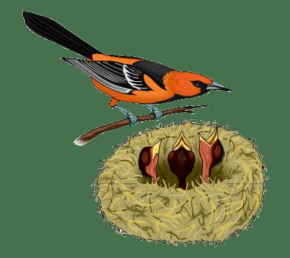 VV Fauna Hoogeveen
